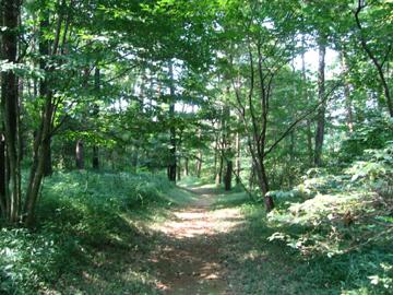 森林公園クロスカントリーコース