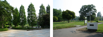 川口自然公園・大崎公園