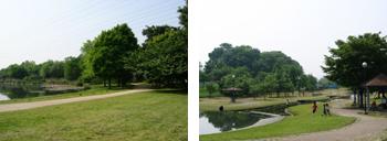 見沼自然公園・七里総合公園
