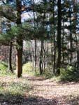 森林公園クロカンコース